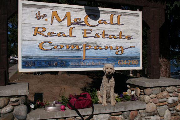 10 Tips For Moving to McCall With Pets