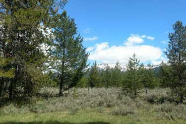 434 Wilhelm Creek Court McCall, ID 83638