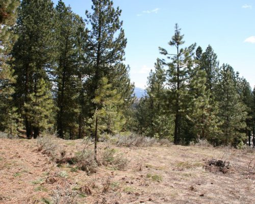 Lot 15 North Wood Court McCall, Idaho 83638