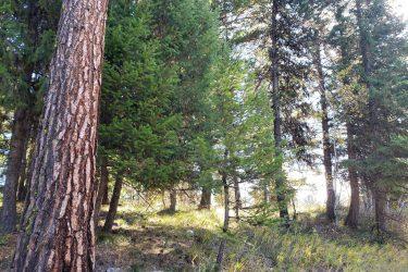 Lot 35 Oakwood Drive McCall, Idaho 83638